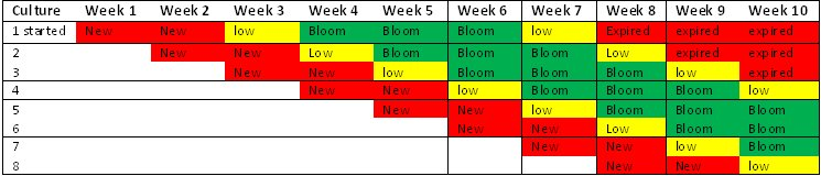 Schedule: 1 new culture per week